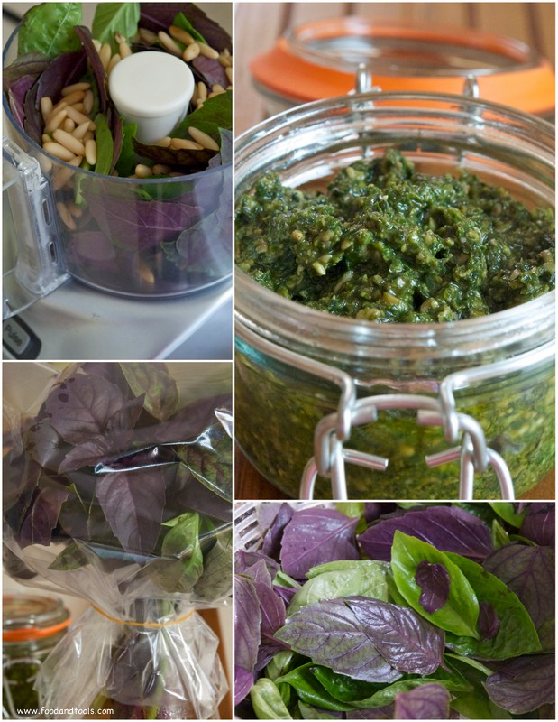 Purple and Green Basil. Basil Pesto in a Jar.