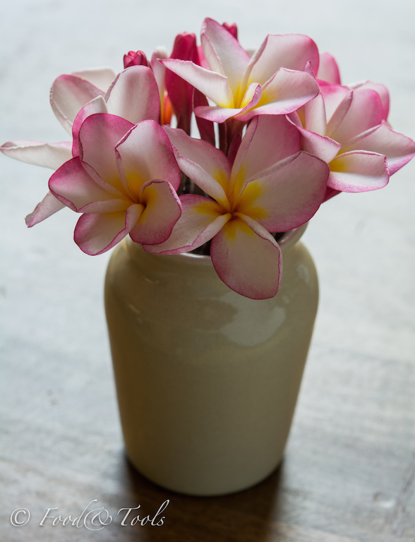 frangipani flowers in a vase