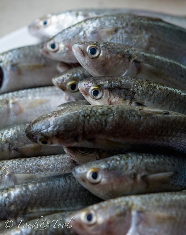 Fish_Maid-9825