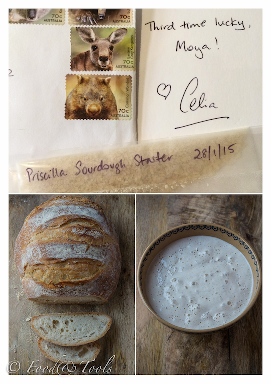 Sourdough Starter and Bread