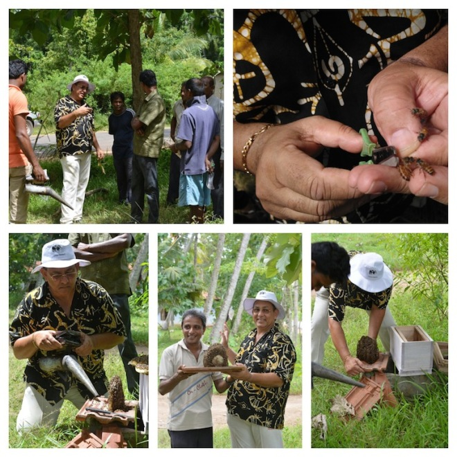 Beekeeping with the locals at Wilaththawa, Chilaw in Sri Lanka